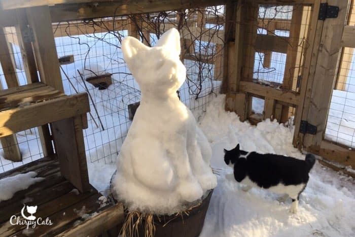 cat and snow sculpture