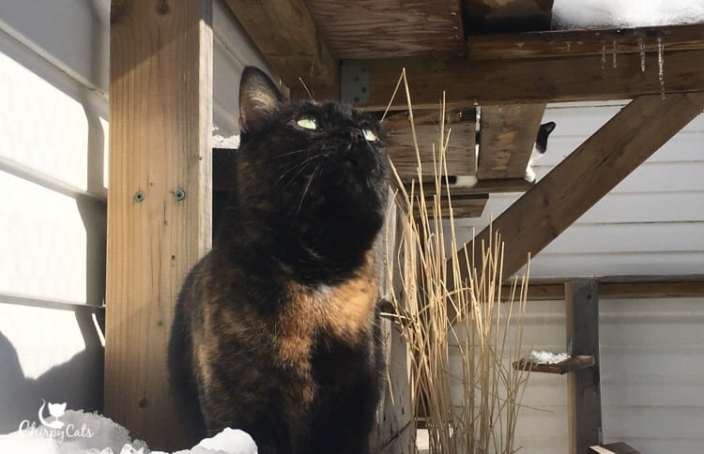 Cat watches icicles falling in catio