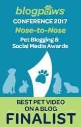 Best Pet Video on A Blog Finalist