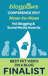 Best Pet Video on A Blog Finalist