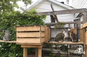 cats relaxing in their catio