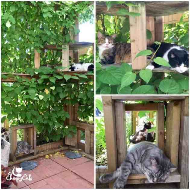 Cats relaxing in catio