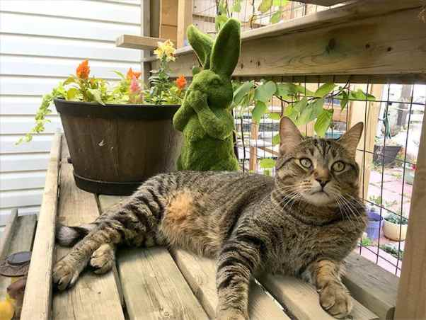 cat relaxes in catio among the flowers