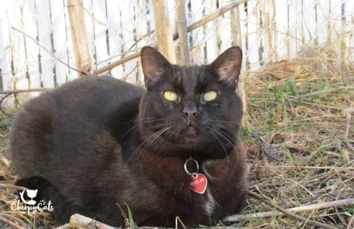 black cat sitting on grass and staring ahead