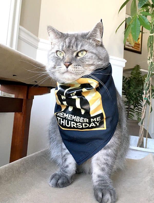 cat wears bandana remember me thursday