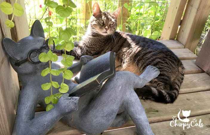 ollie the cat sits in a comfy shaded spot