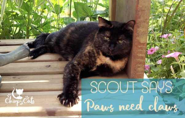 paws need claws, a tortie cat showing off her beautiful claws