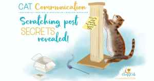 cat communication scratching post cartoon