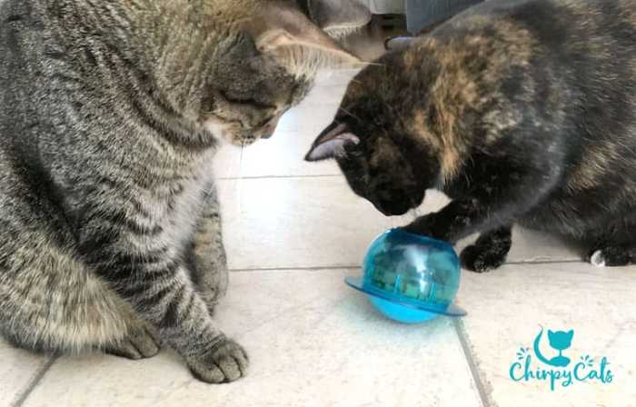 Two cats playing with the fishbowl food puzzle