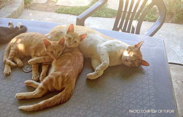 How Kittens Taught a Feral Cat to Love Again #GlobalCatDay