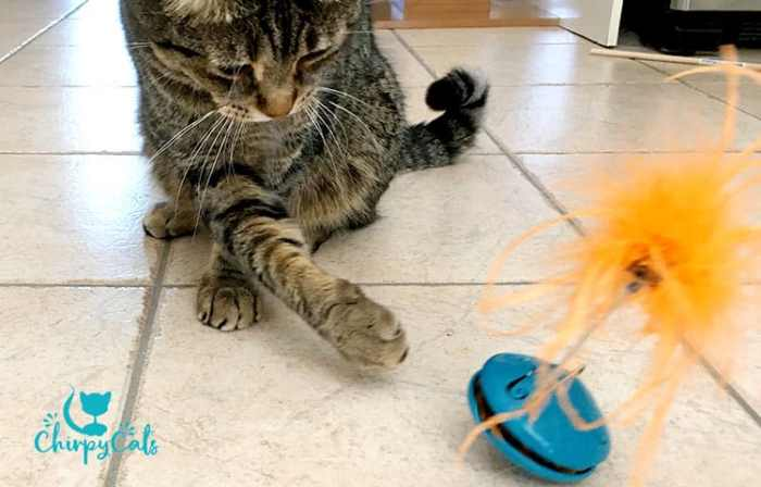 Twist and treat teaser by Petsafe, is a great way to engage your cats foraging instinct.