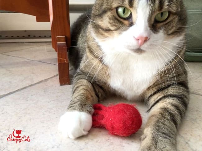 cat and wooly toy, nice and warm inside