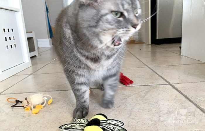 Mr. Jack the social facilitator cat