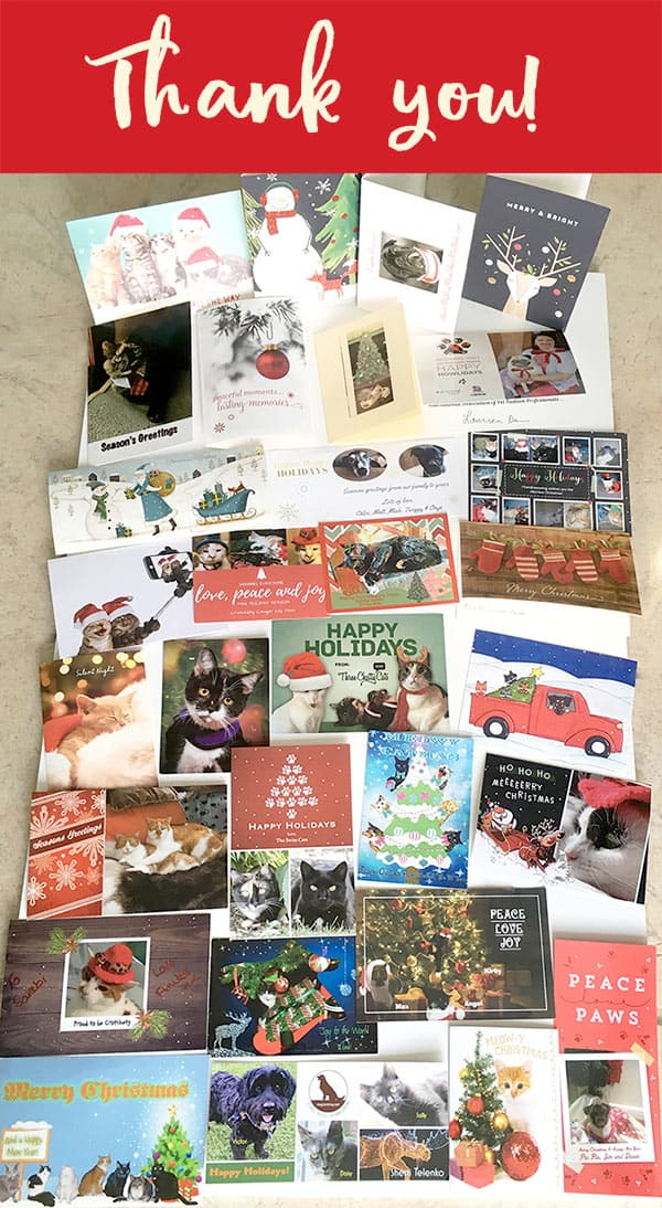 Holiday cards cats and dogs