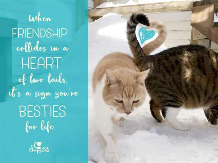 heart of tails wordless wednesday