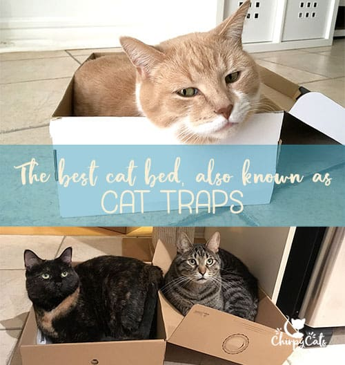 If I fits, I sits. A box of any size and shape is great for cats!