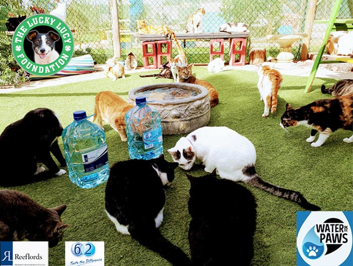 Water for paws donates water to animal shelter
