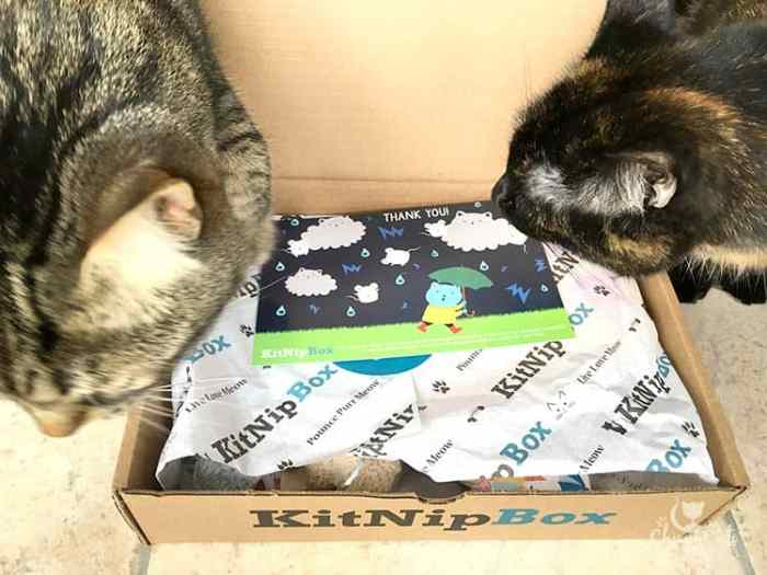 The Chirpy Cats unboxing their new KitNipBox
