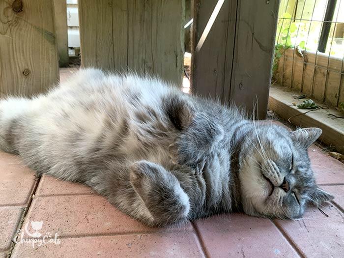 Sleeping grey tabby cat beats the heat
