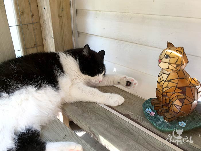 cat seeks a shaded spot to keep cool and fall asleep