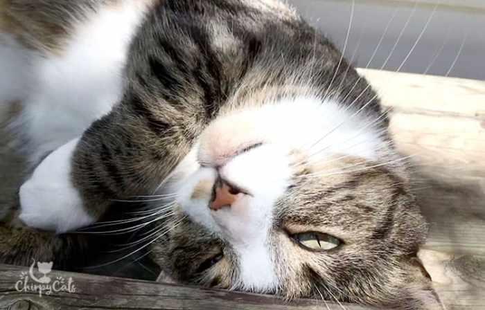 sleep cheeky looking cat