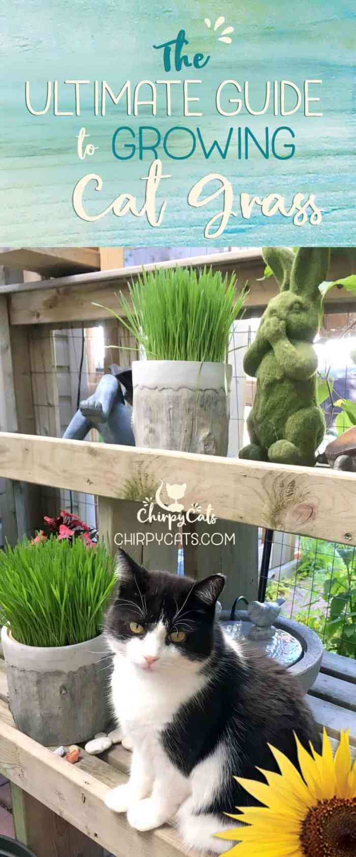 The ultimate guide to growing cat grass
