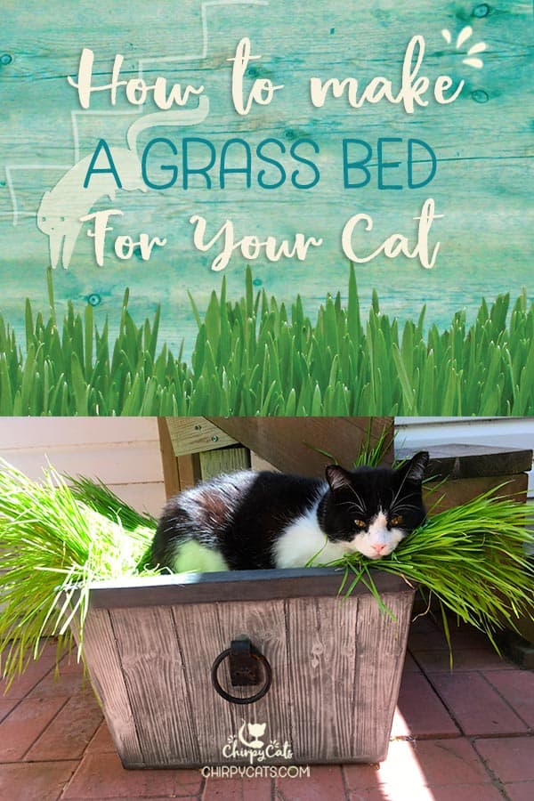 Cats will never run out of places to sleep. They know a comfy spot when they see one, and a grass bed can be just right for an afternoon nap!