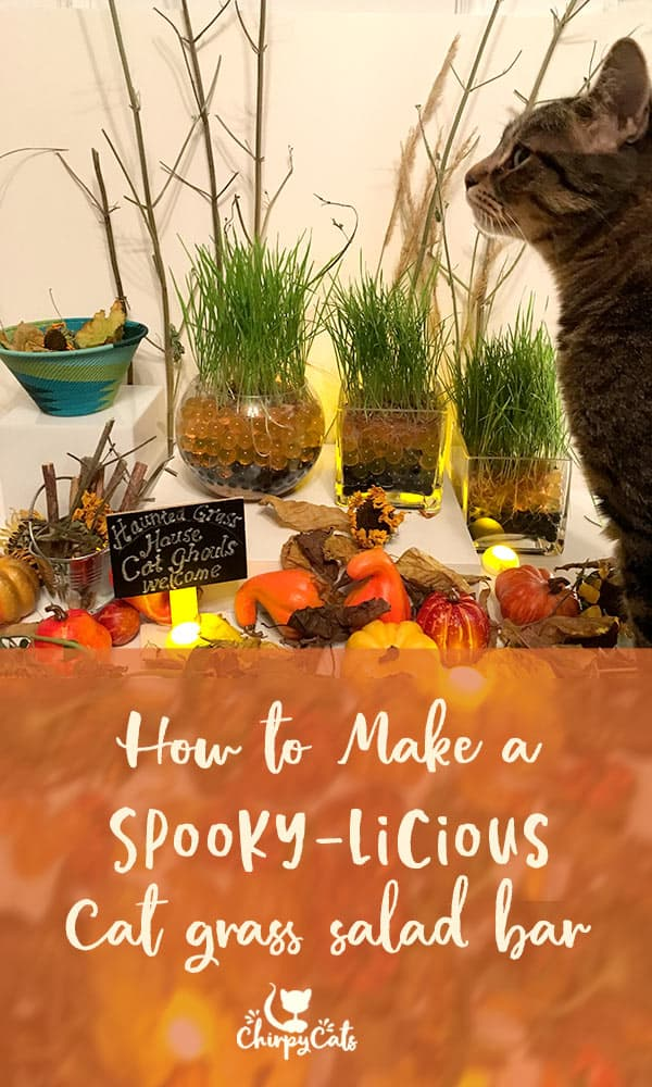 Create a Spooky-licious Cat Salad Bar that\'s frightfully easy with colorful water beads