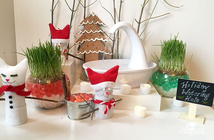 A festive water fountain with cat grass grown in water beads