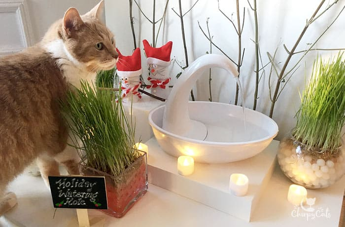 Ginger cat explores the festive water fountain with cat grass