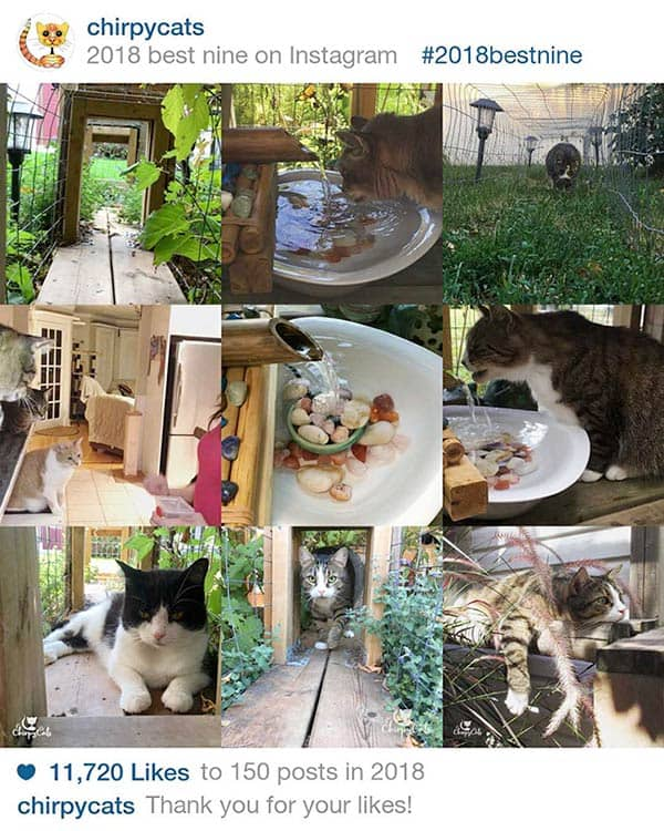 Chirpy Cats best nine 2018