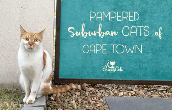 South African Tails of Whiskers in the Heart of Cape Town Suburbs