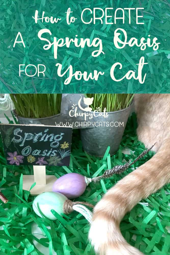 How to Make this Irresistible Spring Grass Oasis Lounge for Your Cat