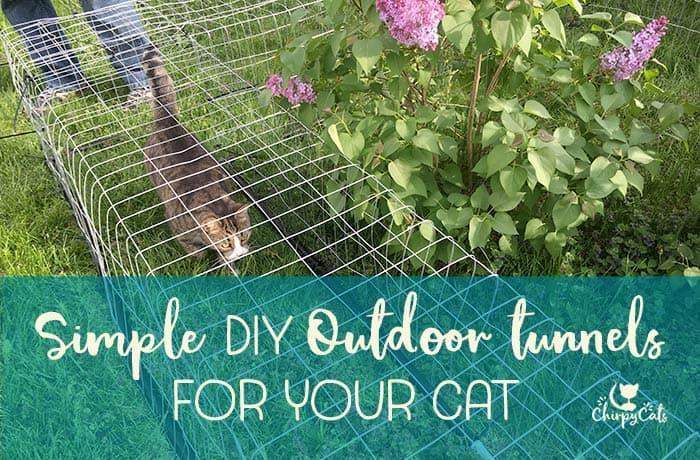 cat walking through diy outdoor cat tunnels on grass