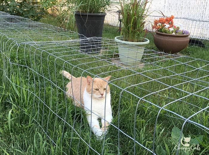 ginger cat relaxing in outdoor cat tunnels