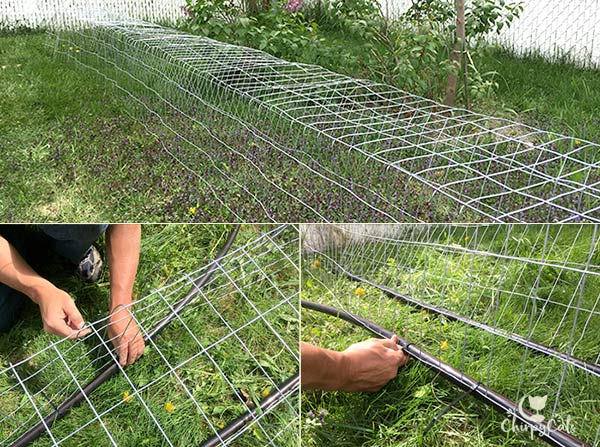 Tying the pvc tubing to the wire mesh for the cat tunnels