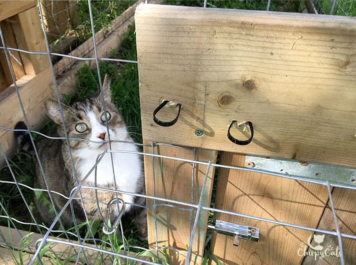 George the tabby cat awaits the opening of the cat tunnels