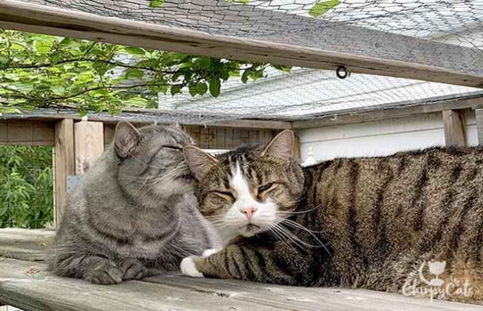 cats grooming on a catio highway