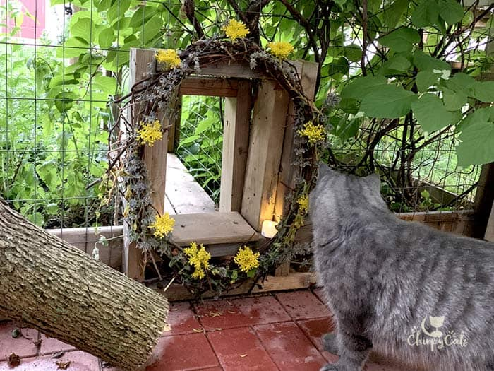 ambient light early evening in catio with grey tabby cat