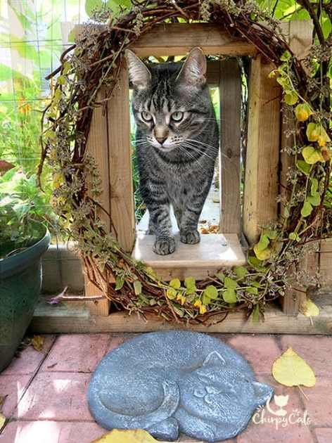 cat at entrance of catio tunnel with summer wreath