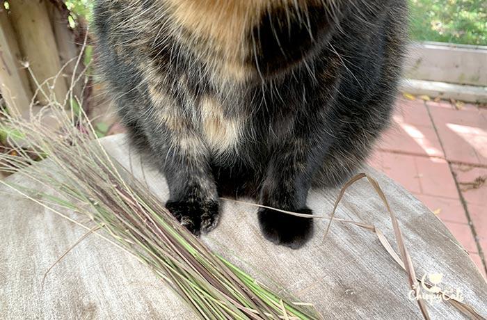 tortie cat sitting next to gathered grass bundle