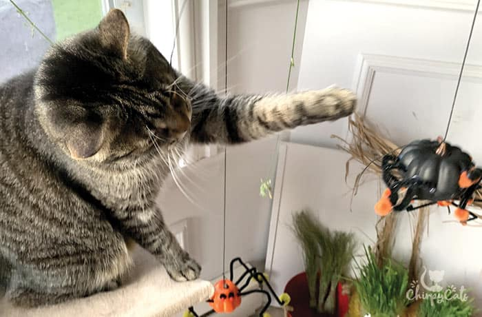 tabby cat plays with DIY cat toy made from foam pumpkin