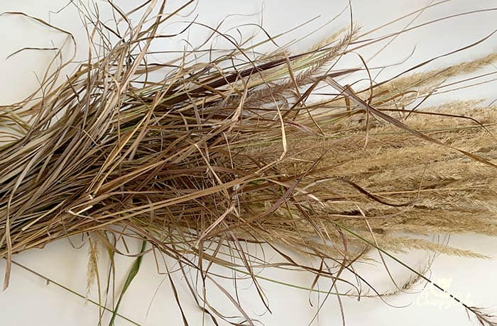 a bundle of reed grass with the plumes