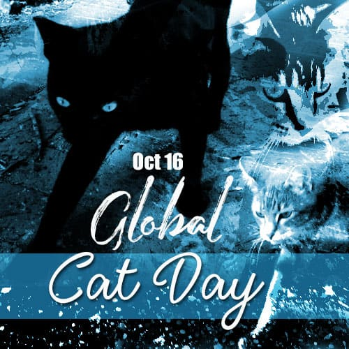 Global cat day 2019