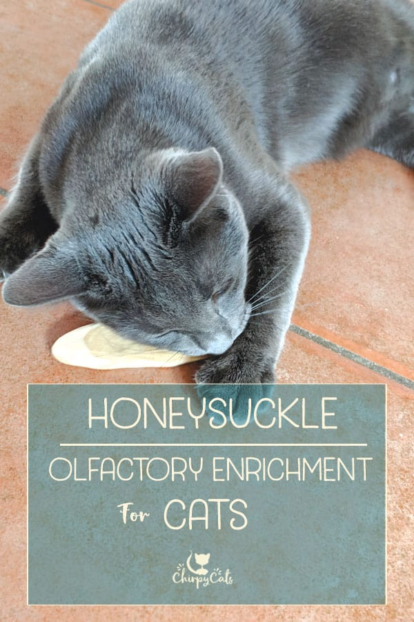 How honeysuckle can uplift your cat to another level of olfactory enrichment