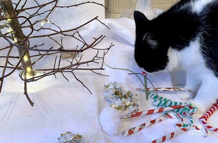 tuxedo cat exploring his new catnip candy canes under the Catmas tree