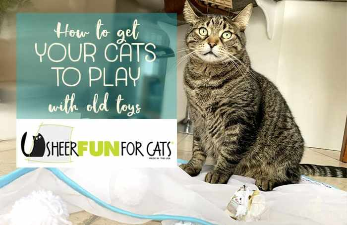 how to get your cat to play with old toys