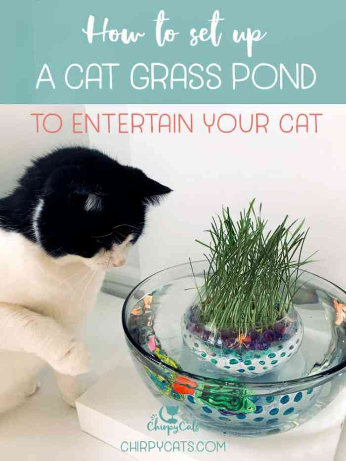 How to Make This Unique and Simple Cat Grass Pond Using Water Beads