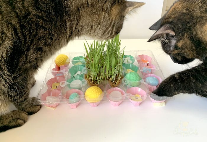 smart cats foraging for food at homemade puzzle feeder for cats