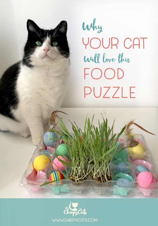 How to Engage your Cat's Foraging Instincts With This Fun Food Puzzle
